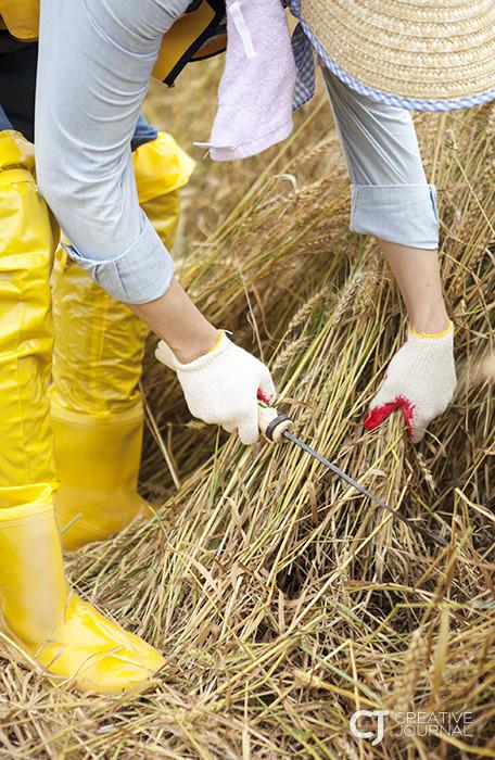 迈着轻快的脚步去见跛子小麦